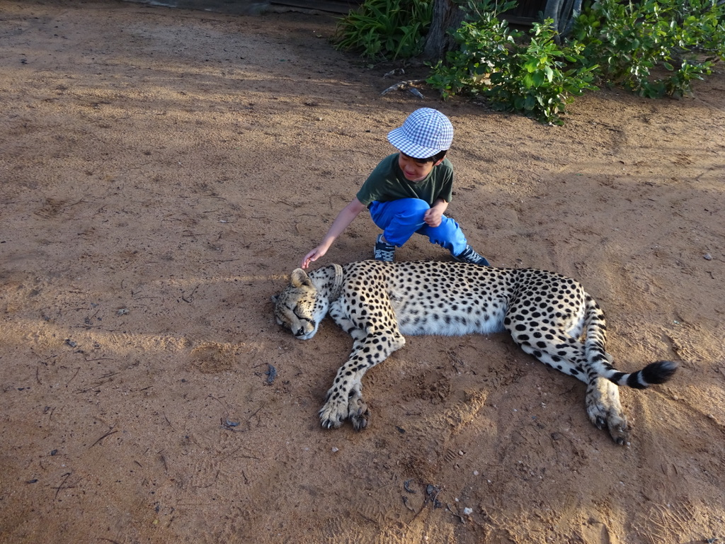 南アフリカで孤児チーターとお子さん